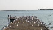 Ove godine trebalo bi da počne izmuljavanje Palićkog jezera